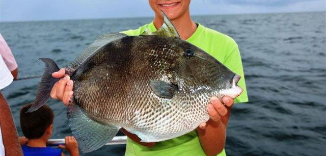 Reminder: Gulf of Mexico Gray Triggerfish and Greater ...